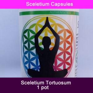 sceletium 1 pot
